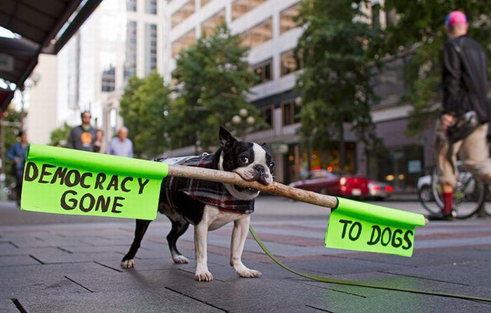 demokratija psi