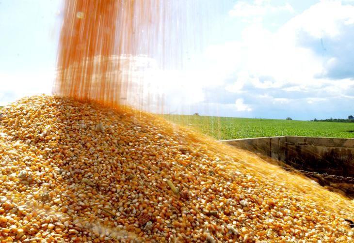 kukuruz najnovija fotka