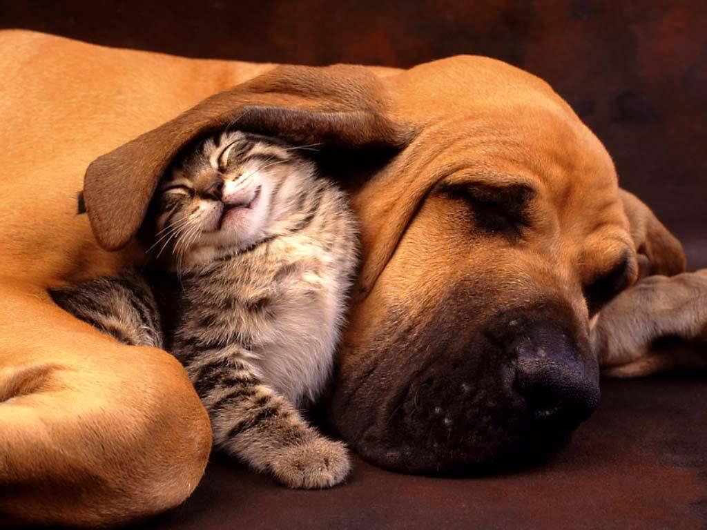 pas i macka spavanje