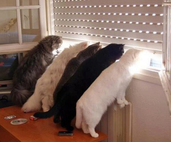 five-cats-looking-out-the-window