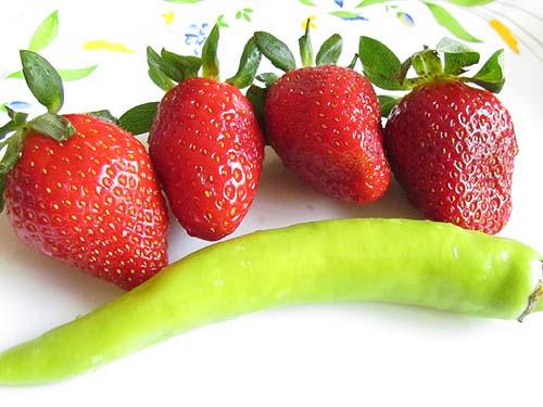 jagode rusija izvoz