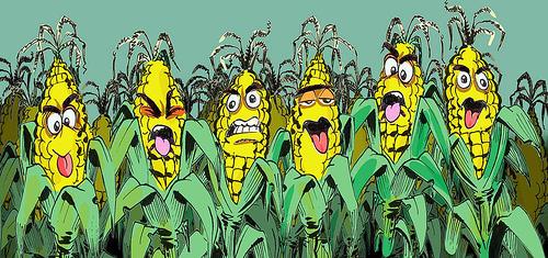 kukuruz smoren
