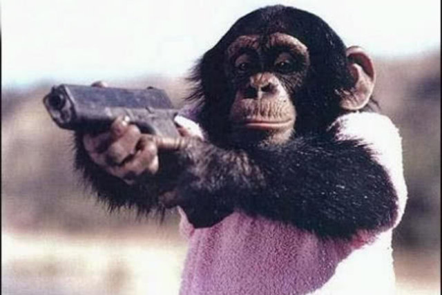 majmuni4