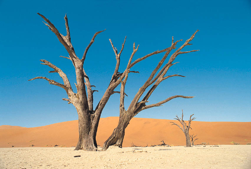 Dead tree in desert landscape